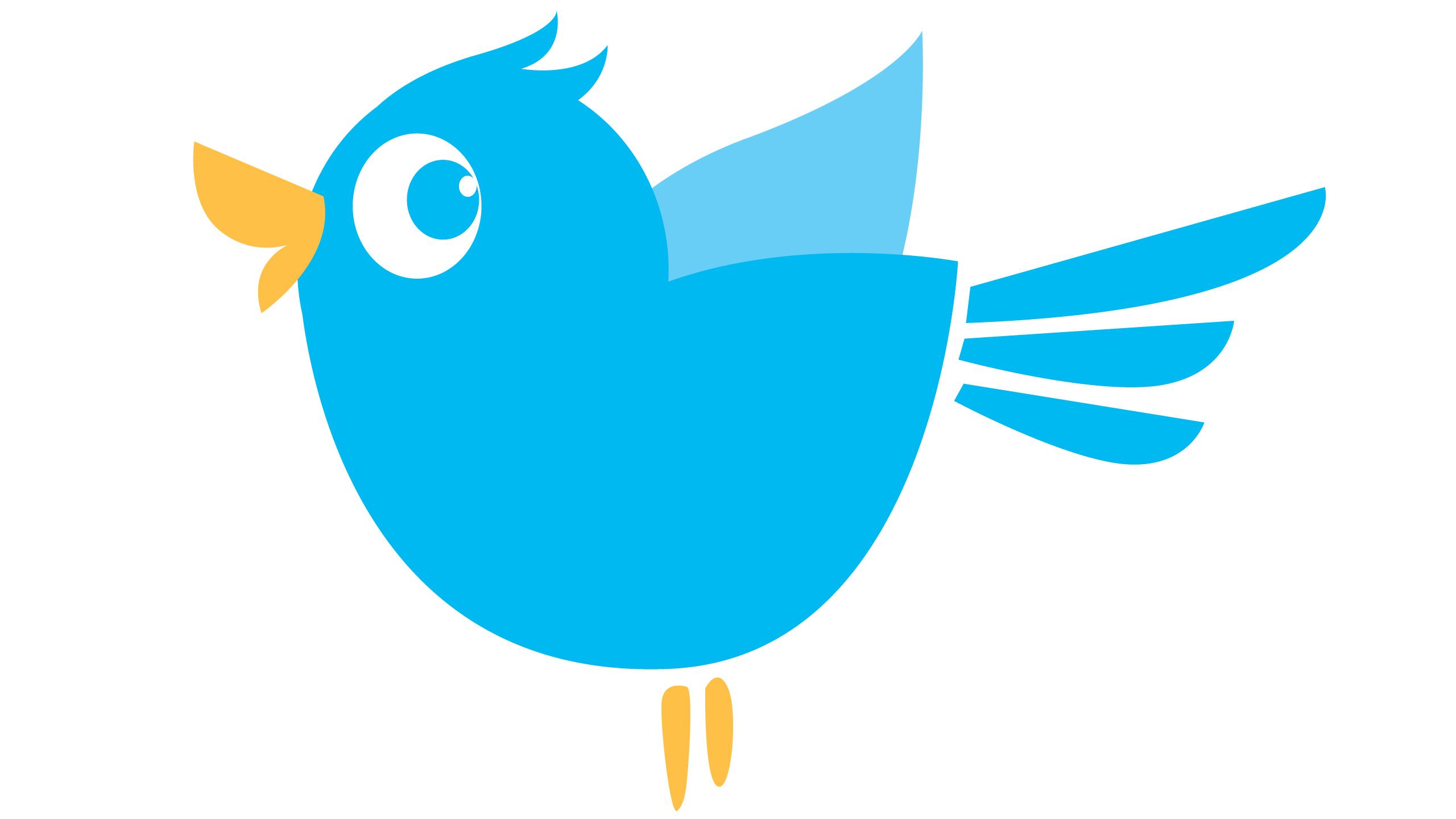Blue Bird Day bird