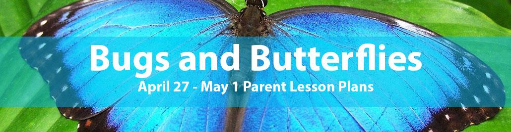 Blue Bird Day bugs and butterflies
